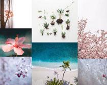美麗的花朵多肉攝影高清圖片