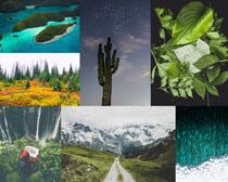 美景葉子綠色風光攝影高清圖片