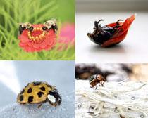 花朵與昆蟲攝影高清圖片
