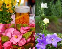 漂亮的色彩花朵攝影高清圖片