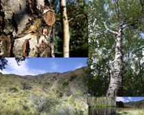 樹木植物森林攝影高清圖片