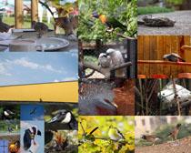 美麗的飛鳥動物攝影高清圖片