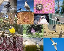 鳥類動物拍攝(she)高清圖片
