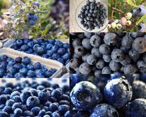 新鲜美丽的蓝莓摄影高清图片