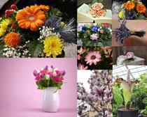 美麗插花鮮花攝影高清圖片