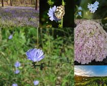 鲜花花朵与蝴蝶摄影高清图片