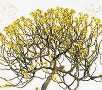树技头金色花朵PSD素材