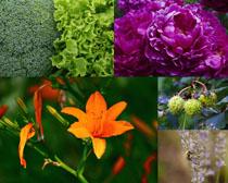 春天漂亮的花朵攝影高清圖片
