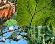 春天植物花朵攝影高清圖片