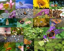 漂亮的蝴蝶与花朵拍摄高清图片