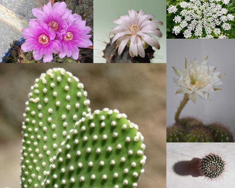 仙人掌與花朵攝影高清圖片