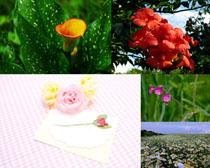 園林里的花朵攝影高清圖片