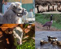 野外動物拍攝高清圖片