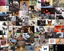 貓咪各類拍攝高清圖片