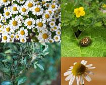 春天花朵与叶子摄影高清图片