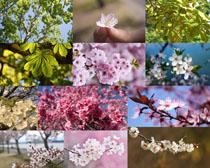 春天盛开的花朵摄影高清图片