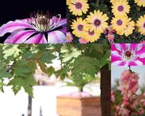 漂亮的盛开花开拍摄高清图片