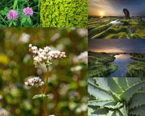 大自然植物拍攝高清圖片