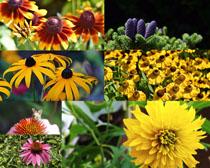 花丛鲜花花朵拍摄高清图片