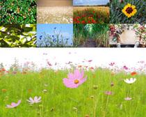 春天花丛中的花朵拍摄高清图片
