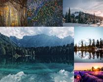 漂亮的森林风光拍摄高清图片