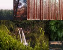 树林草叶风景拍摄高清图片
