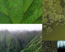 绿色树林风光摄影高清图片