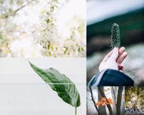 春天葉(ye)子植物攝(she)影高清圖片