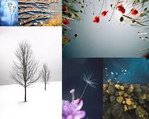 花朵樹木植物拍攝高清圖片