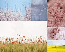 春天美丽的花朵摄影高清图片