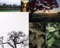 植物葉子樹木攝影高清圖片