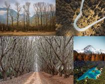 树林与道路拍摄高清图片