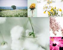 漂亮美丽的花朵摄影高清图片