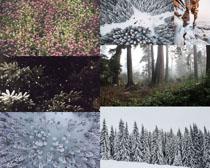 雪景树林景观拍摄高清图片
