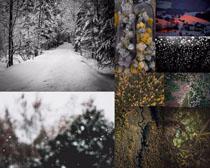 森林树木风景拍摄高清图片