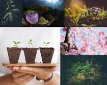 美麗花朵盆栽植物拍攝高清圖片