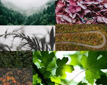 樹木葉子植物拍攝高清圖片