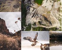 山峰老鹰风景拍摄高清图片