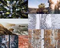 树木风光景色摄影高清图片