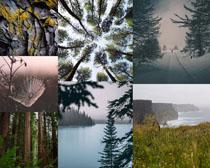 树木绿色景观拍摄高清图片