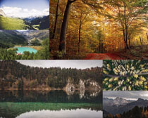 樹木樹林風光拍攝高清圖片