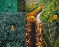 綠色環境森林攝影高清圖片