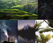绿色山川树叶风景摄影高清图片