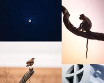 猴子小鳥黑夜攝影高清圖片