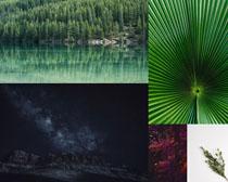 湖水绿叶风景拍摄高清图片