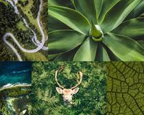 綠色森林植物攝影高清圖片