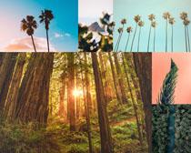 树木自然景观拍摄高清图片