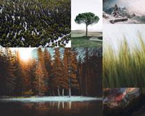 樹木森林植物攝(she)影高清圖片