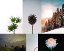 樹木花朵植物攝影高清圖片