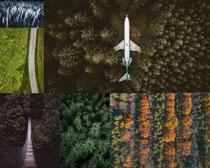 茂密的树林植物摄影高清图片